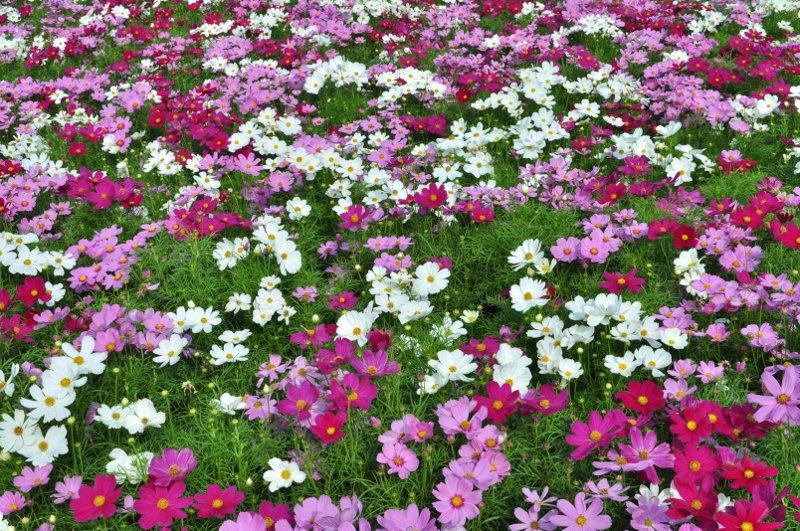 Giardino_fiorito