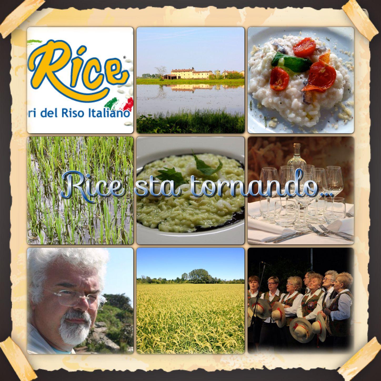 Rice2per_sito